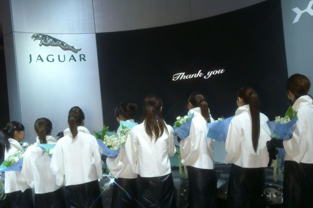 Jaguar_29
